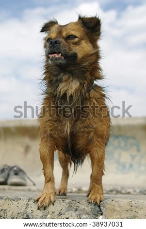 Ugly Dog Stock Photos, Images, & Pictures | Shutterstock
