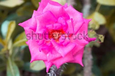 Really pretty flowers the most beautiful flower 2017 1920x1200px pretty flowers backgrounds wallpapersafari mightylinksfo