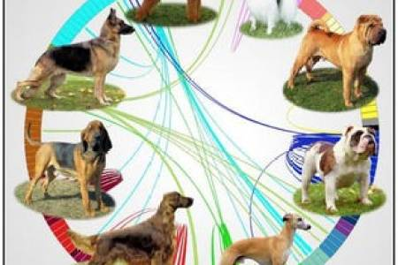 Old Dog  New Dog  Genetic Map Tracks The Evolution Of Man s Best Friend