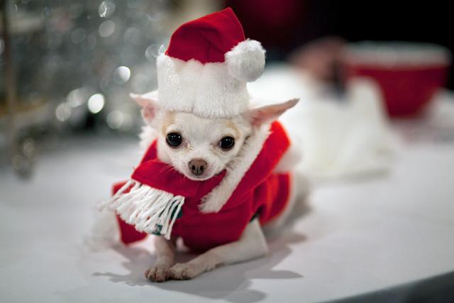 Cute Christmas Animals 55