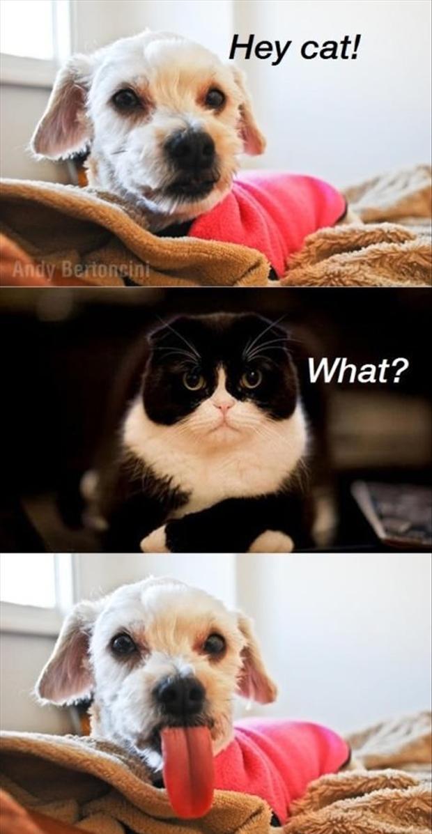 Make Me Laugh 45 Cat