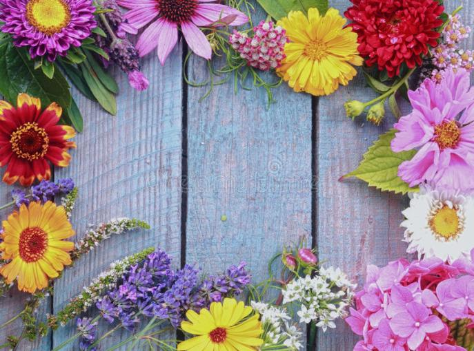 Colorful Frame Of Fresh Summer Flowers Stock Photo   Image of floral     Download Colorful Frame Of Fresh Summer Flowers Stock Photo   Image of  floral  assorted