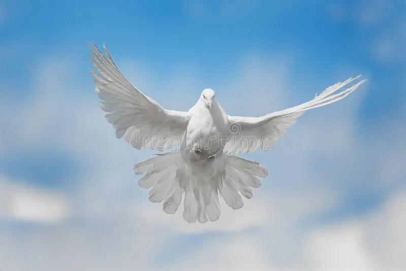 Flores Palomas Blancas Con Volando