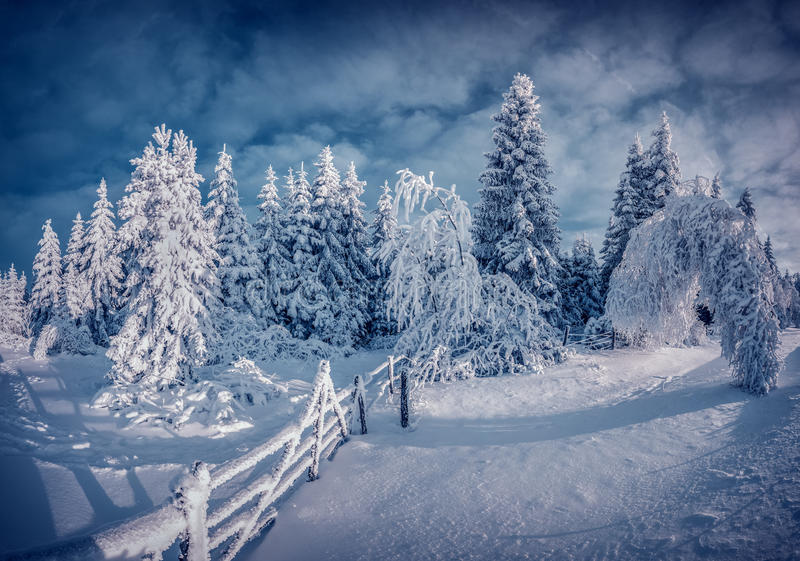 Night Winter Scene In The Mountain Forest Stock Photo