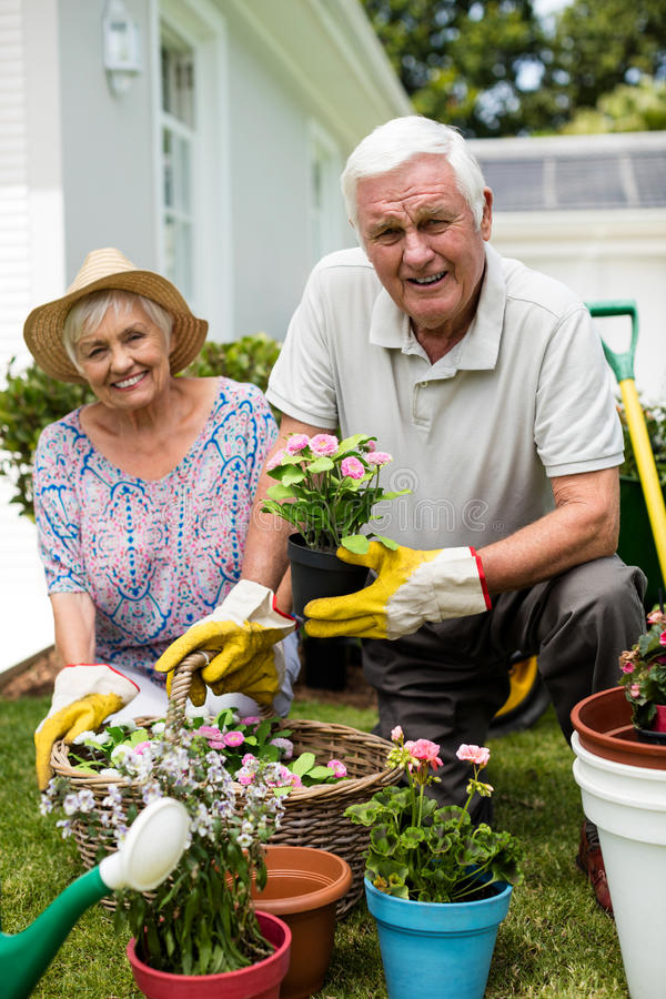 Portrait Of Senior Couple Working In Garden Together Stock ...