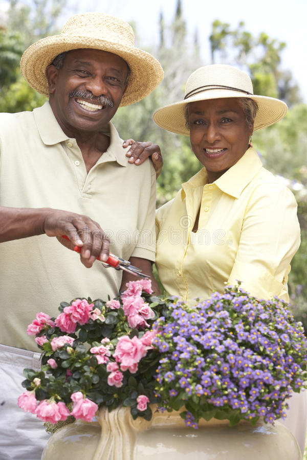 Senior Couple Gardening Together Stock Photo - Image of ...