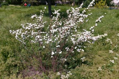 Best wild flowers spring flowering shrubs white flowers wild flowers spring flowering shrubs white flowers these flowers are very beautiful here we provide a collections of various pictures of beautiful flowers charming mightylinksfo