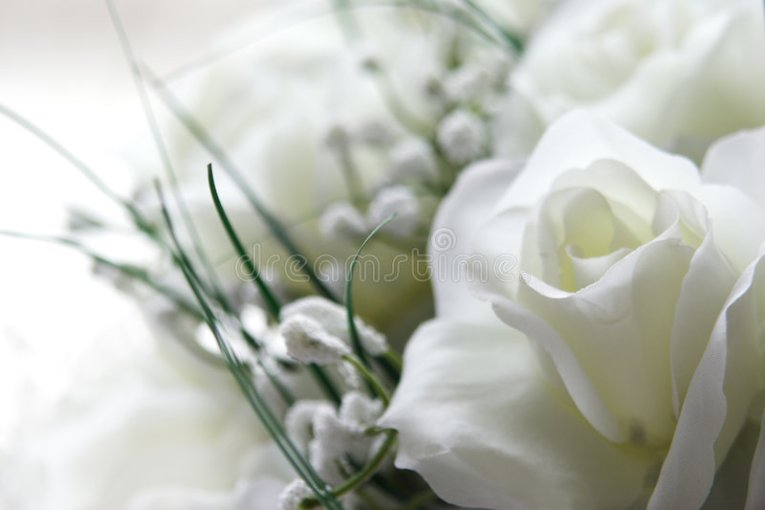 pics of white flowers   Animaxwallpaper com White Flowers Stock Photo Image Of Soft Feminine Romantic 292310