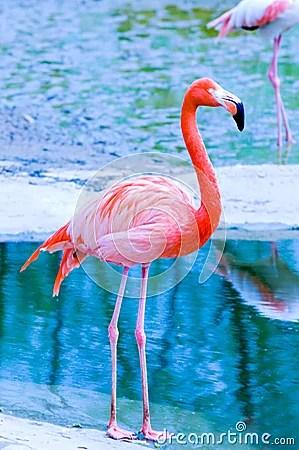 Pink Flamingo Royalty Free Stock Photo Image 5089865