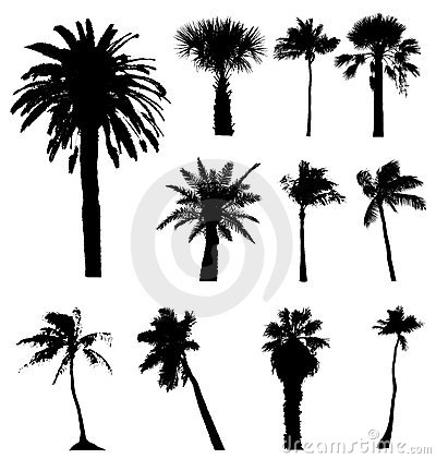 Vector Palm Trees Silhouettes Isolated On White Background Palms Tree Palmtree Palmtrees