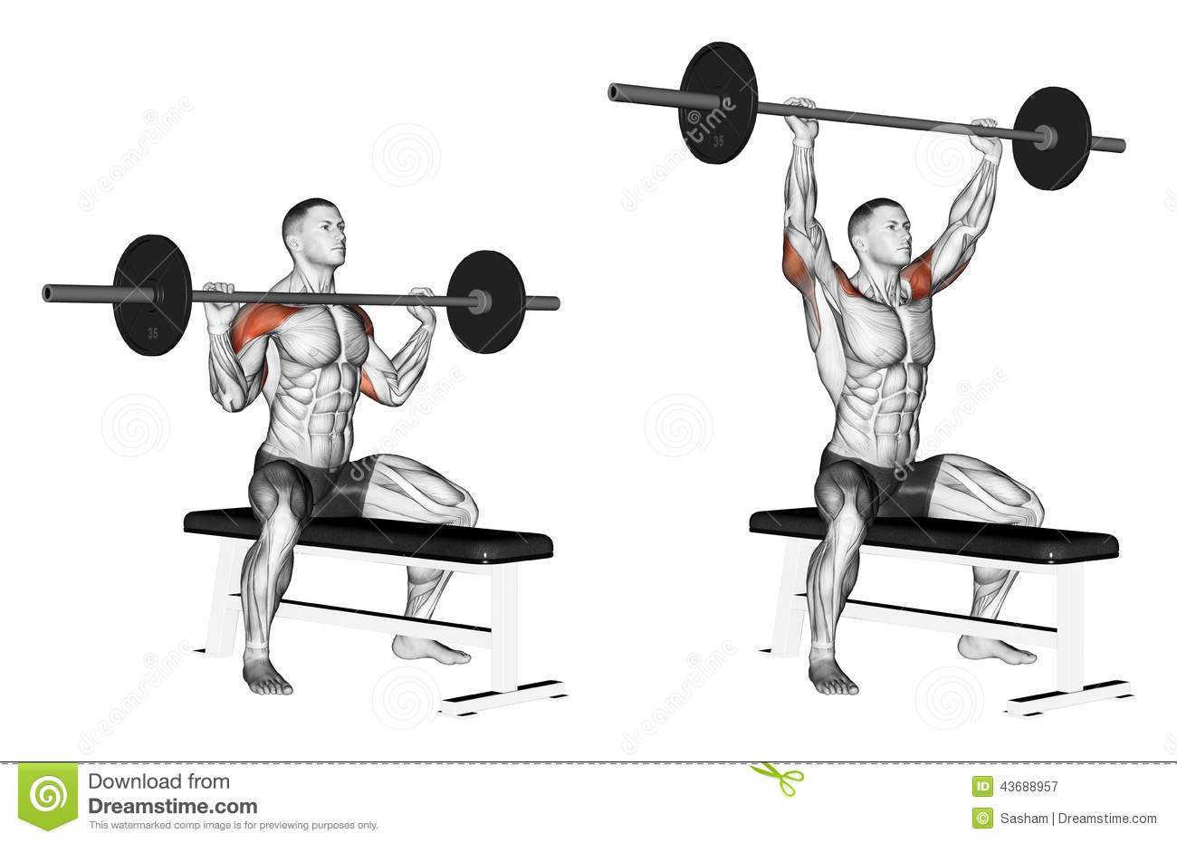 barbell military press exercise - 800×509