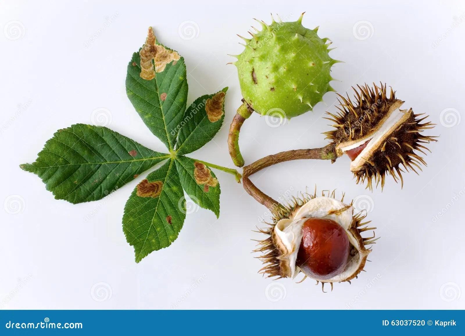 Fresh Grocer 56 Chestnut