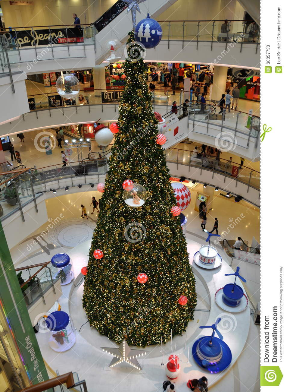 People Shopping Christmas Trees