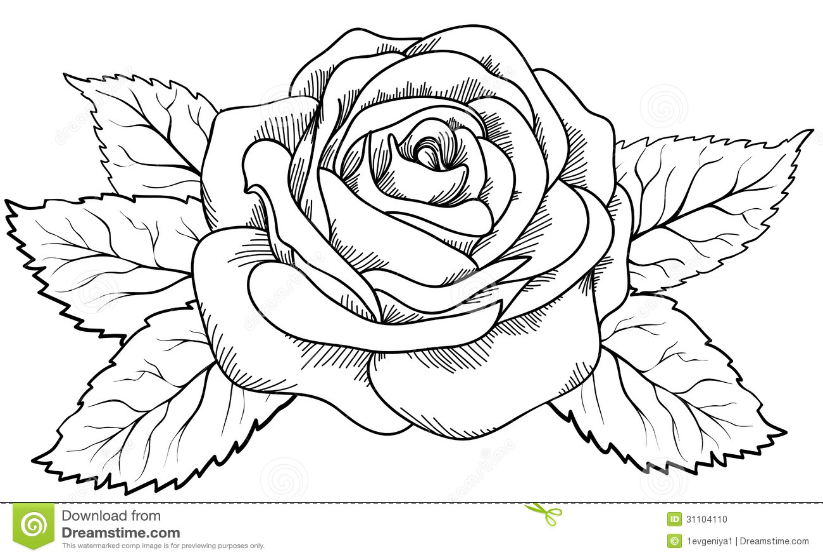 knumathise: Realistic Rose Drawing Outline Images