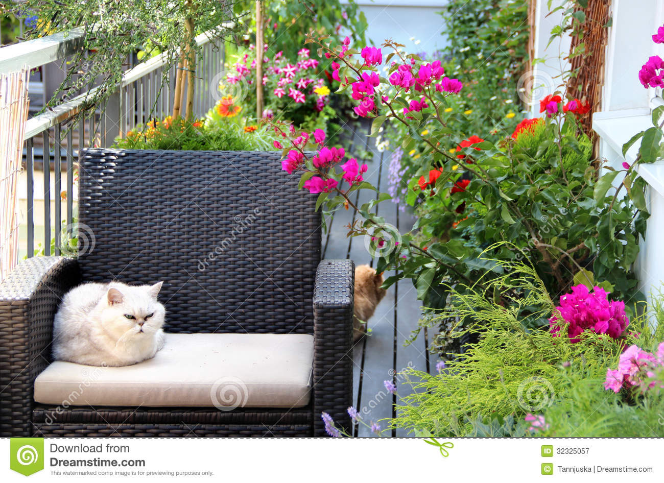 Beautiful Terrace With Cats And Lot Of Flowers Royalty