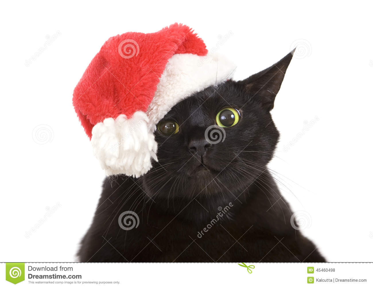 Black Cat Santa Cute Christmas Cat Christmas Pet With