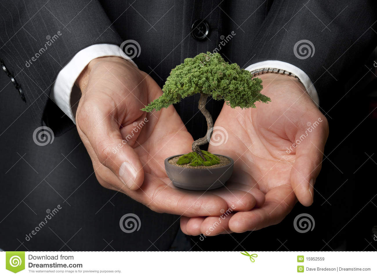 Business Management Bonsai Tree Wisdom Royalty Free Stock
