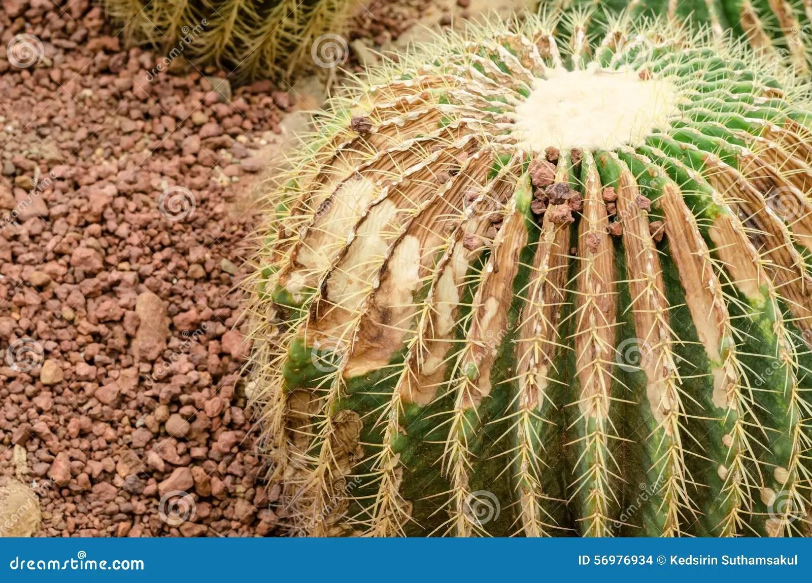 Arizona Desert Botanical Garden
