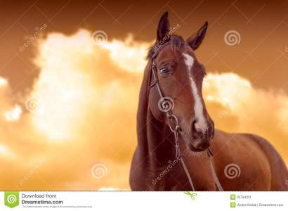 Cheval De Guerre Image Stock. Image Du Nature, Closeup - 25794331