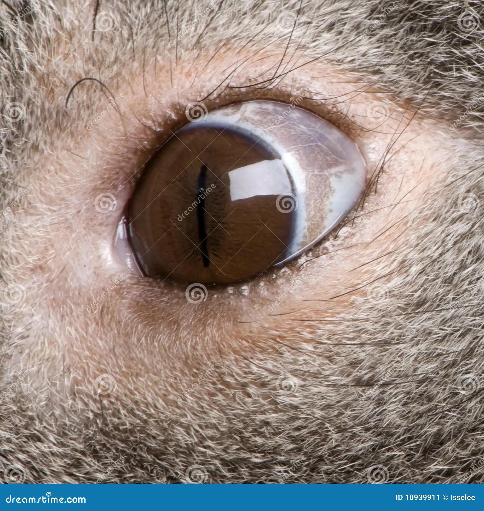 Close-up Of Male Koala Bear Eye Stock Image - Image of ...