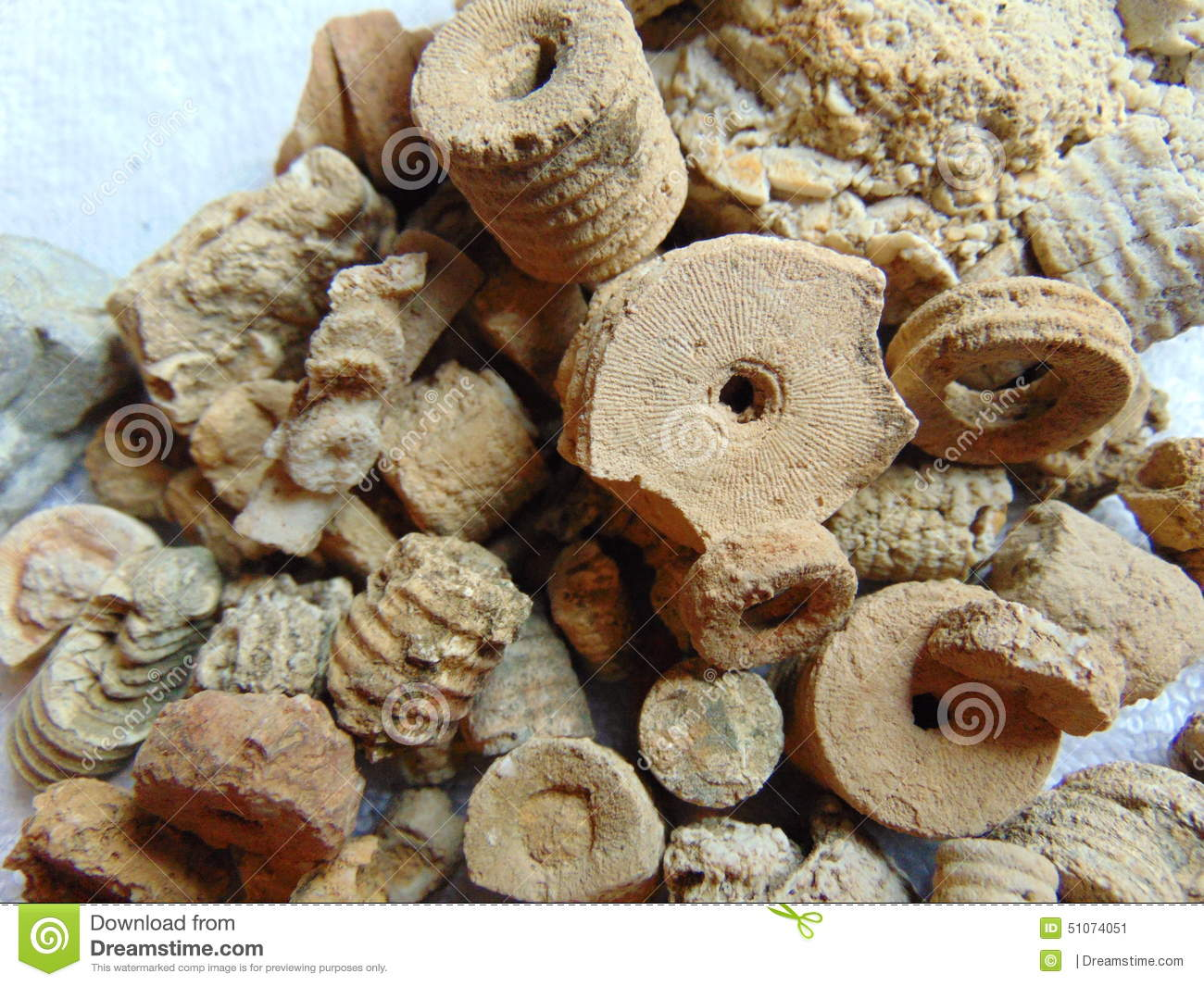 Crinoid fossils stock image. Image of background, pieces ...