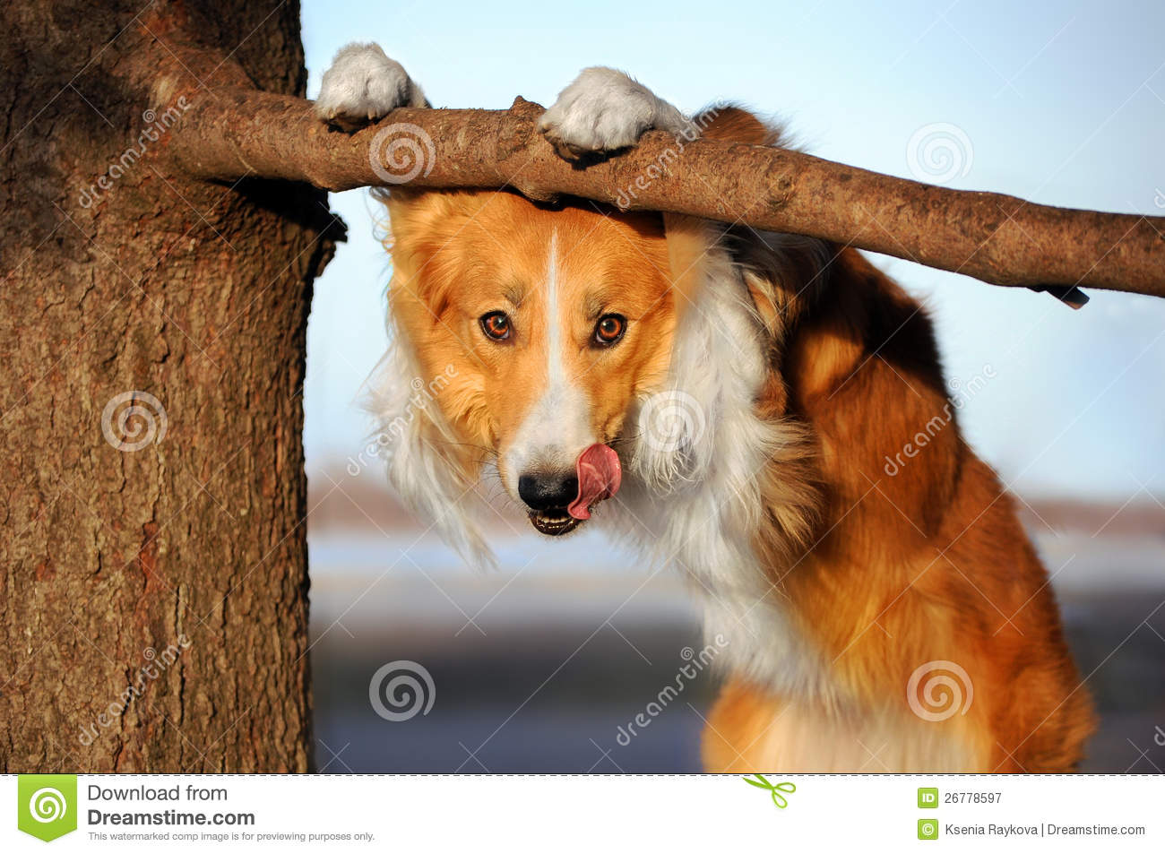 Image of: Cute Puppies Cute Happy Dog Makes Funny Pose And Sticks His Tongue Dreamstimecom Cute Funny Dog Stucks Her Tongue Stock Image Image Of Domestic