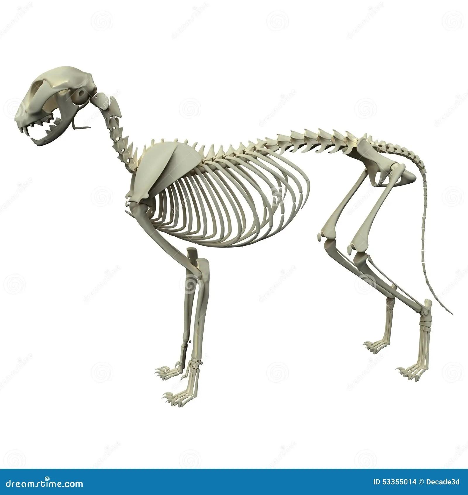 Surgery On Dog Front Leg