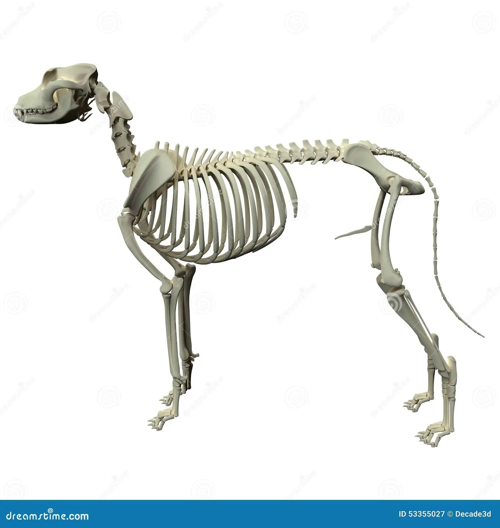 Spine Bones Diagrams Unlabeled