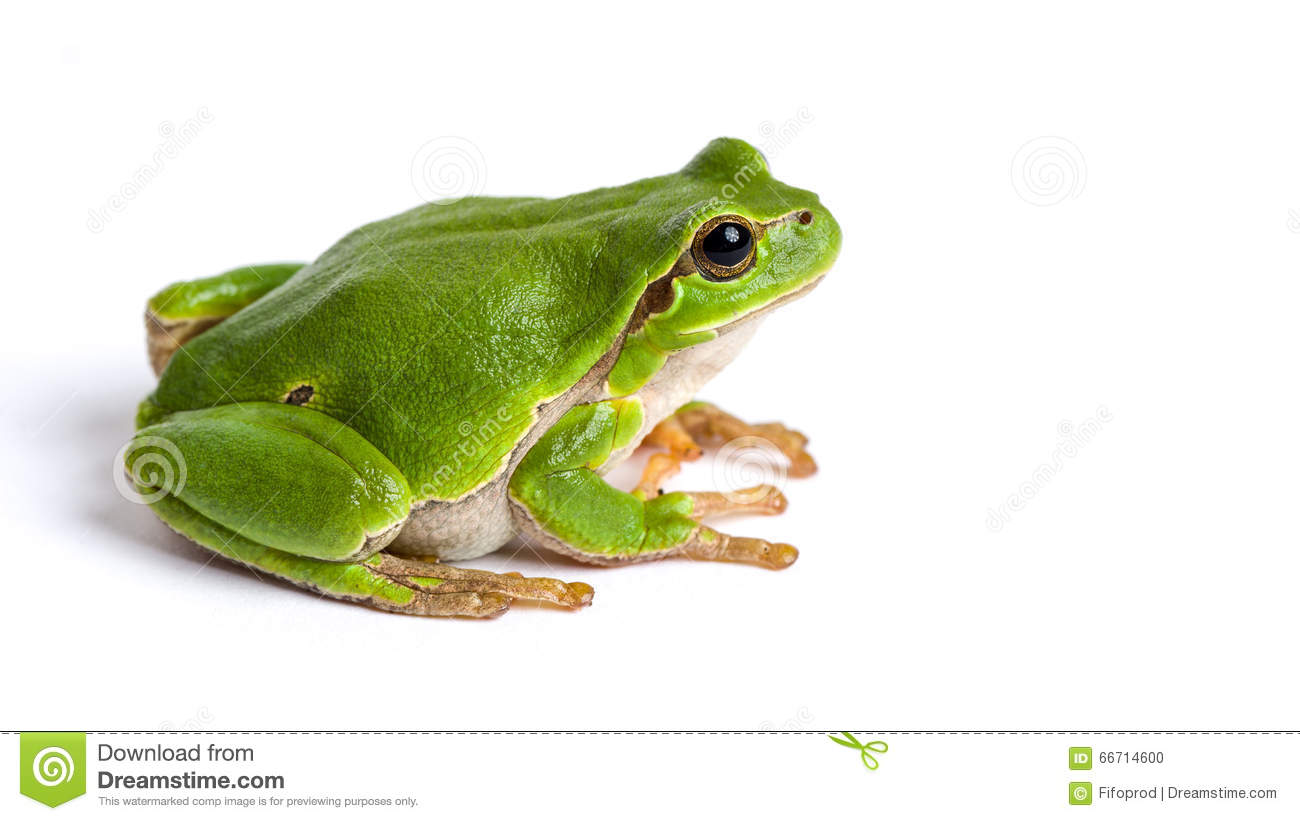 Frog Stock Images - Download 47,851 Royalty Free Photos