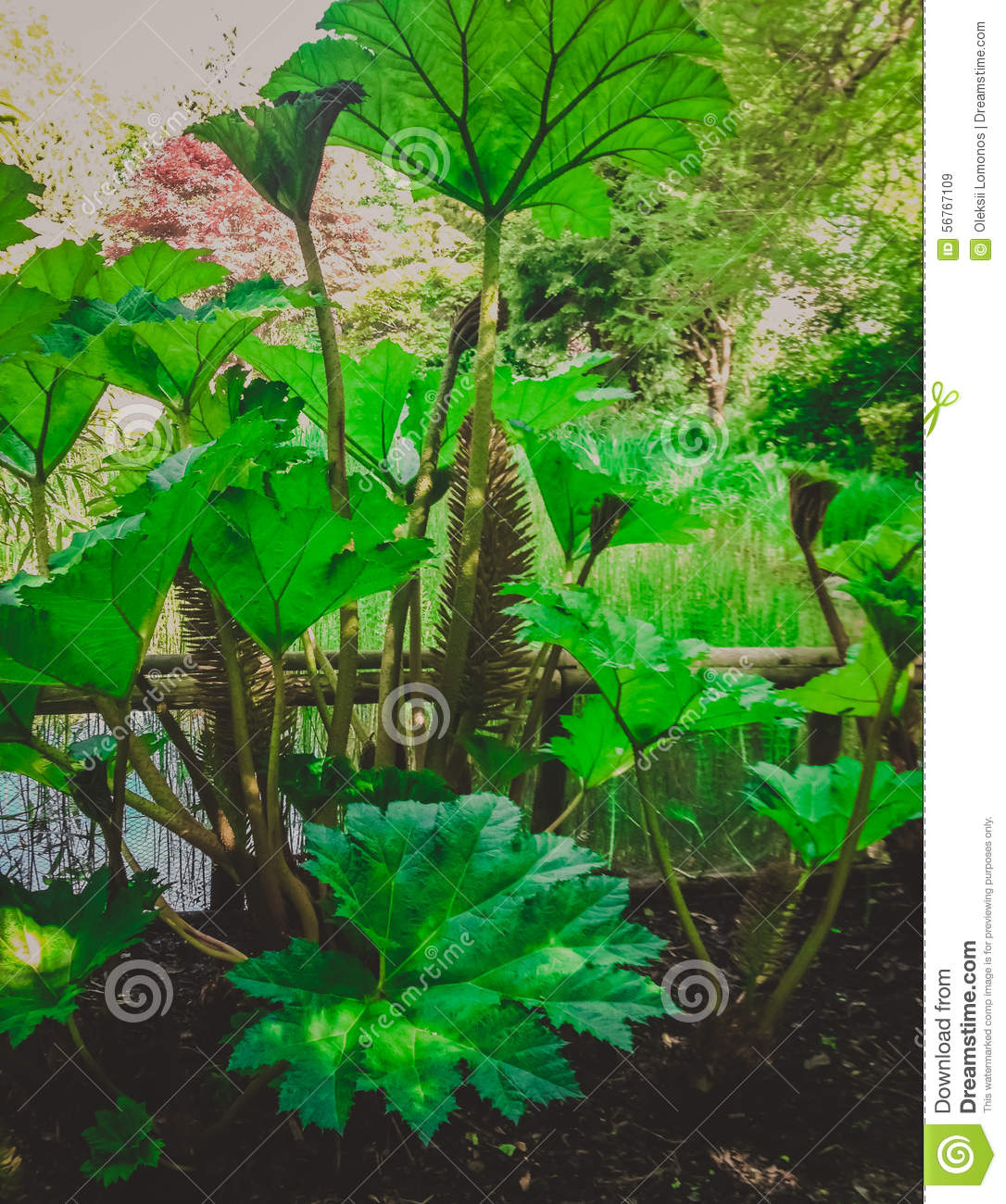 Fast Growing Pond Plants
