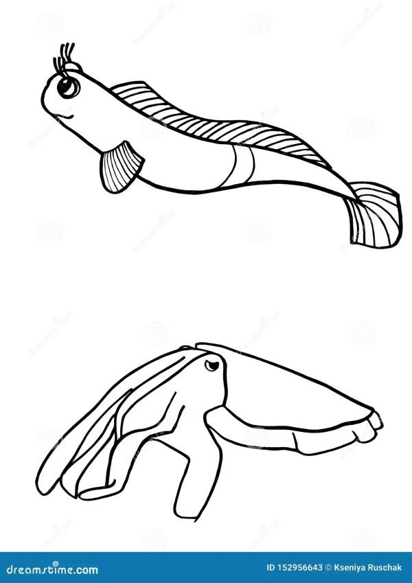 squid coloring pic # 22