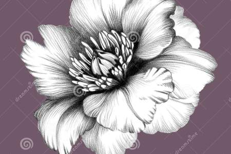 Pencil Sketch Of Flowers 4k Pictures 4k Pictures Full Hq Wallpaper