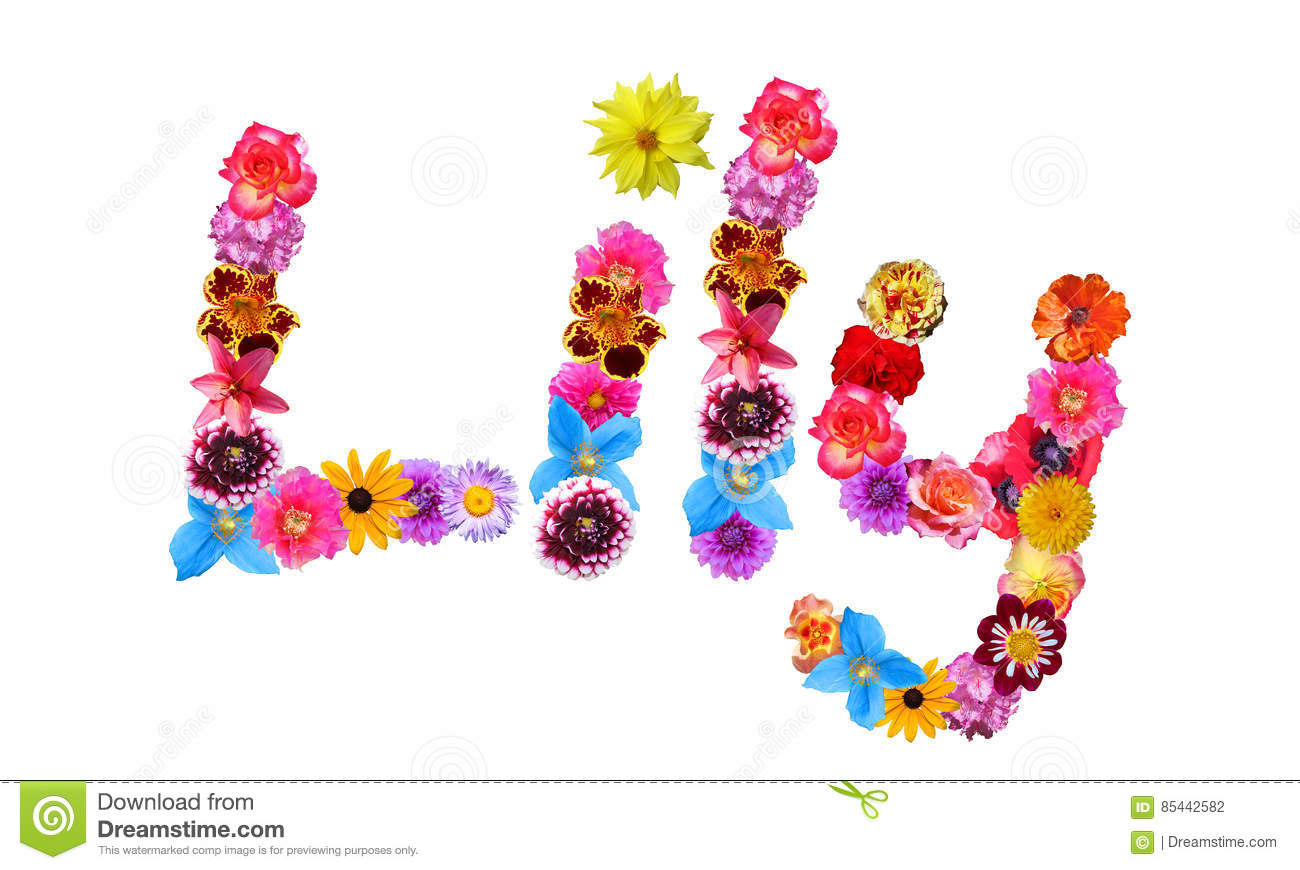 Flowers Name Lily stock illustration  Illustration of baby   85442582 Download comp