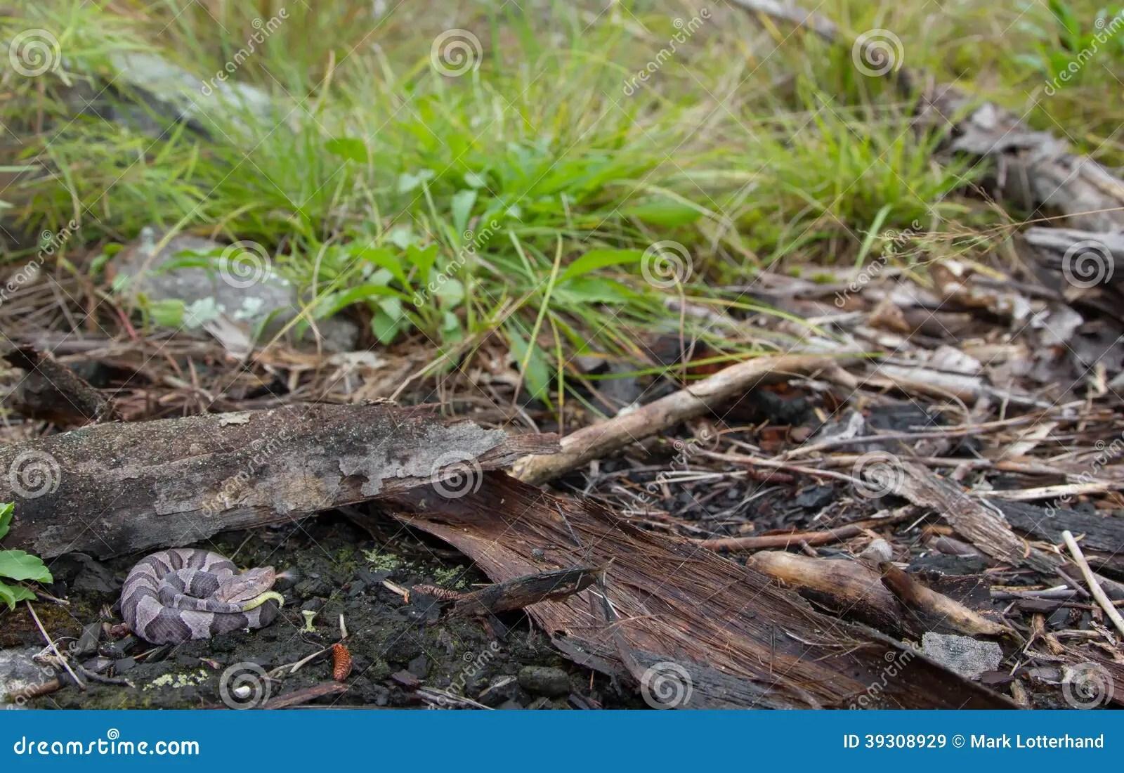 Newborn Northern Copperhand Stock Photo - Image: 39308929