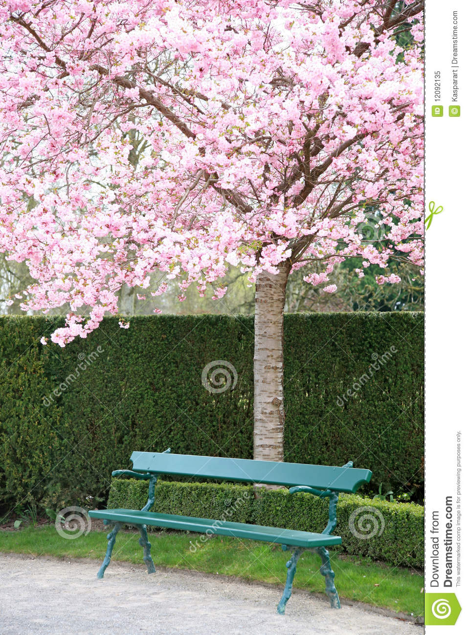 Park Bench Under A Blooming Cherry Tree Stock Image