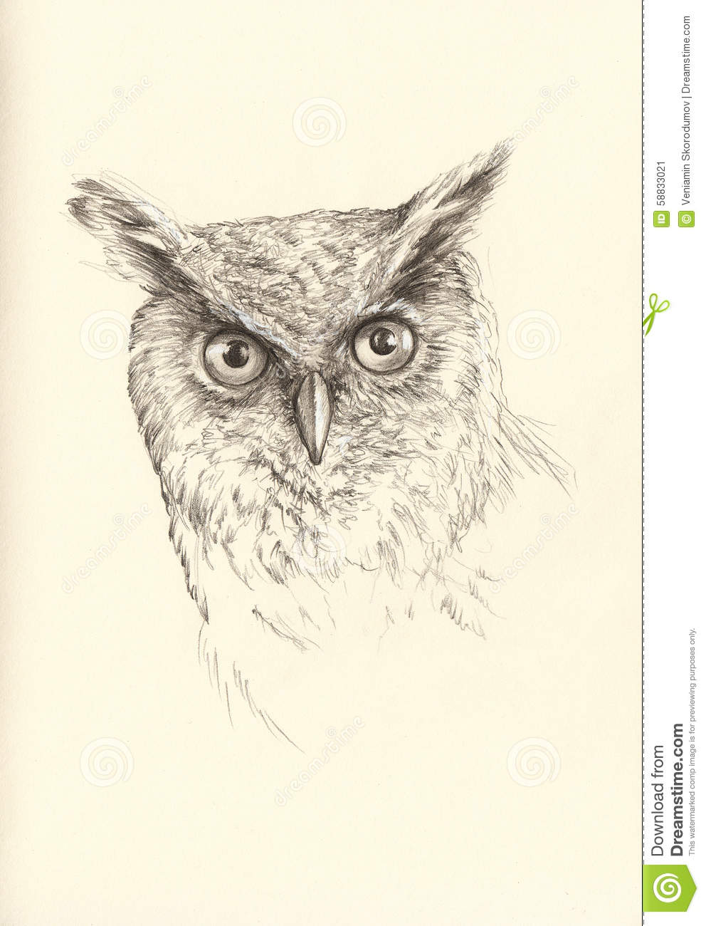 Realistic Owl Drawing Sketch