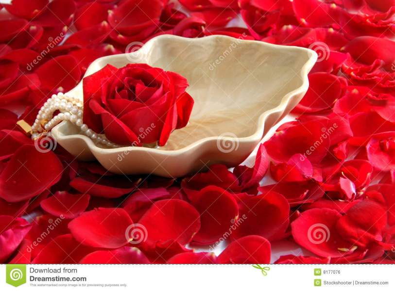 Red Rose Flower Petals Spa Aromatherapy Stock Photo   Image of pure     Download Red Rose Flower Petals Spa Aromatherapy Stock Photo   Image of  pure  relaxation