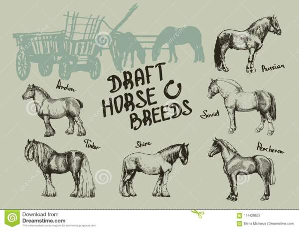 realistic horse breeds # 68