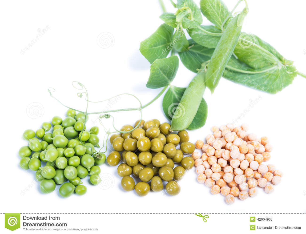 Types Stem Vegetables