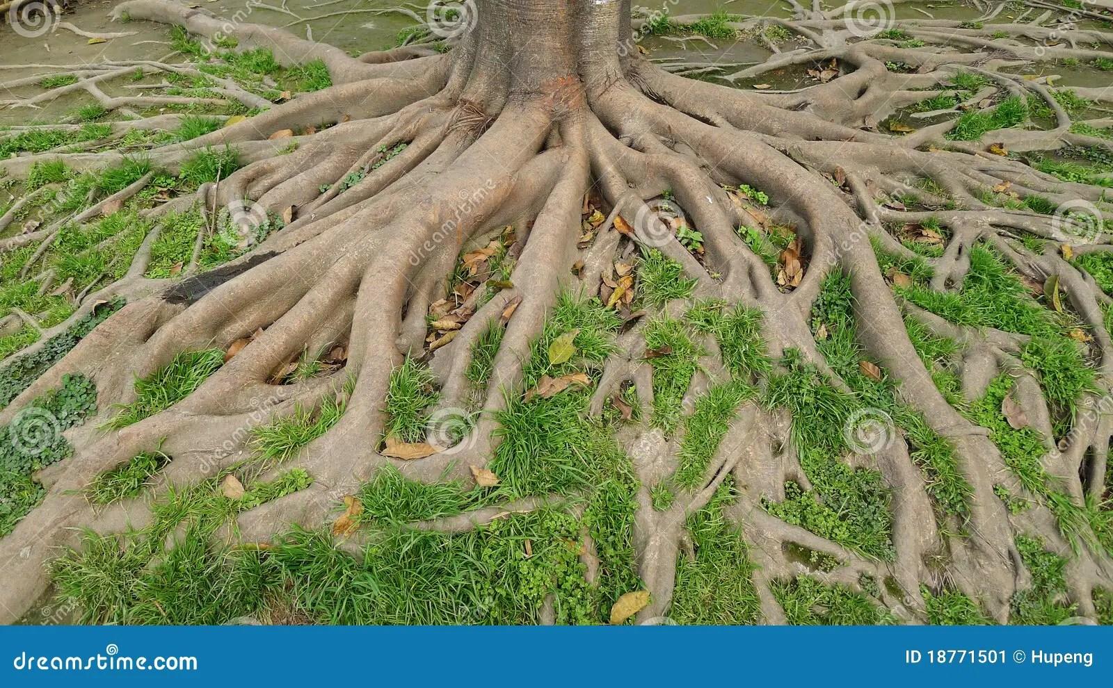 Free Art Dirt Roots Clip