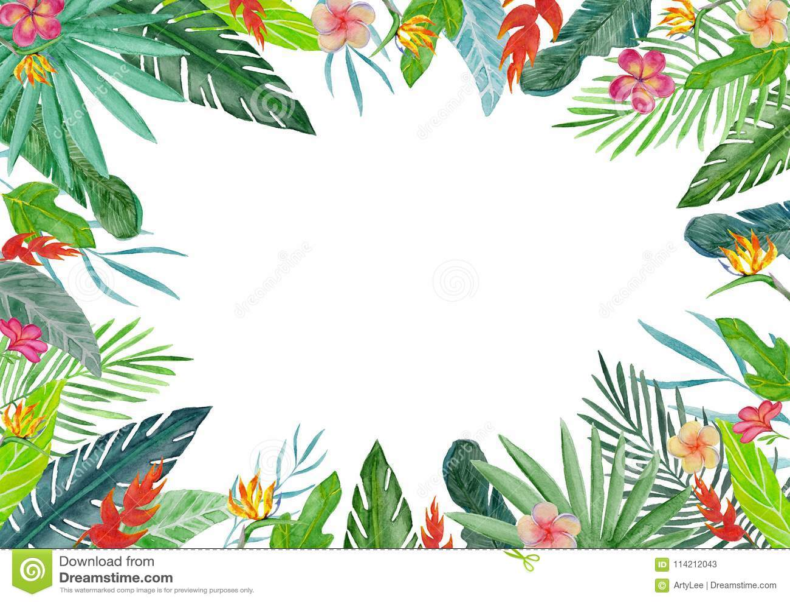 Tropical Borders Free
