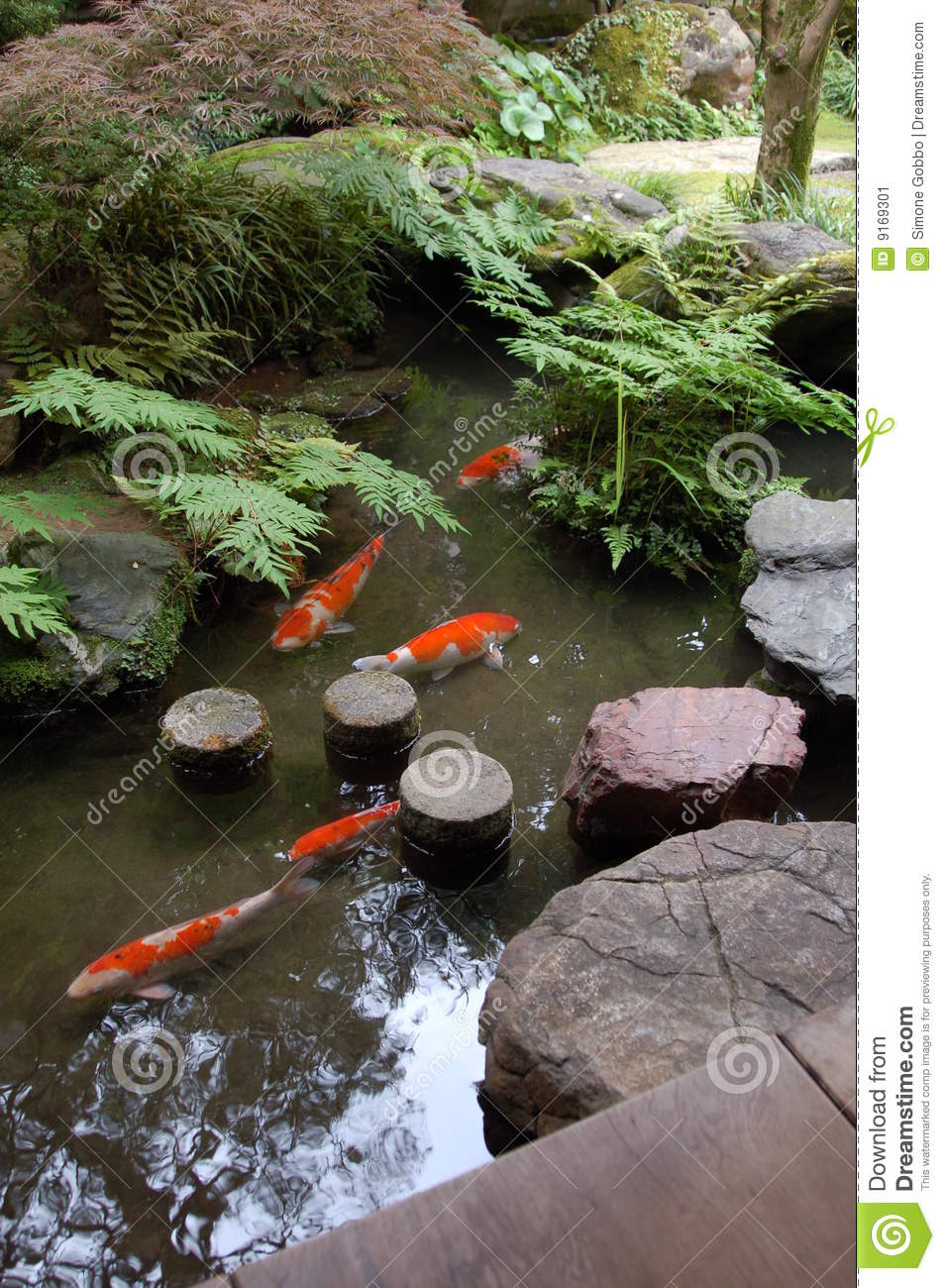 Backyard Koi Fish Pond