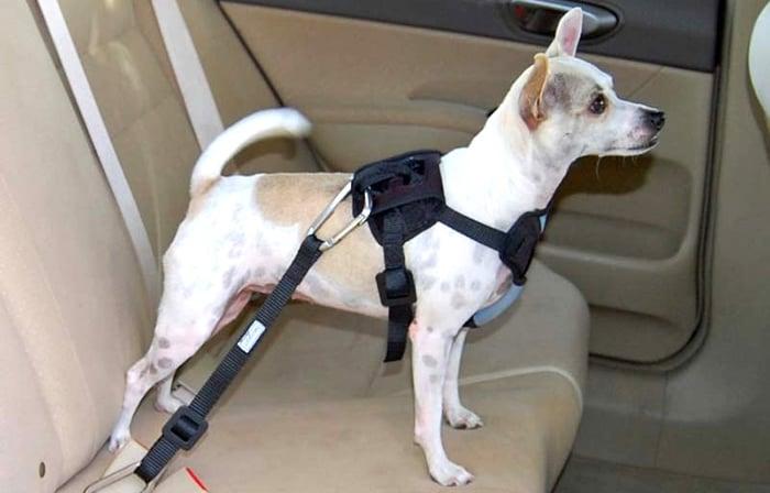 Resultado de imagem para cinto de segurança para cachorro