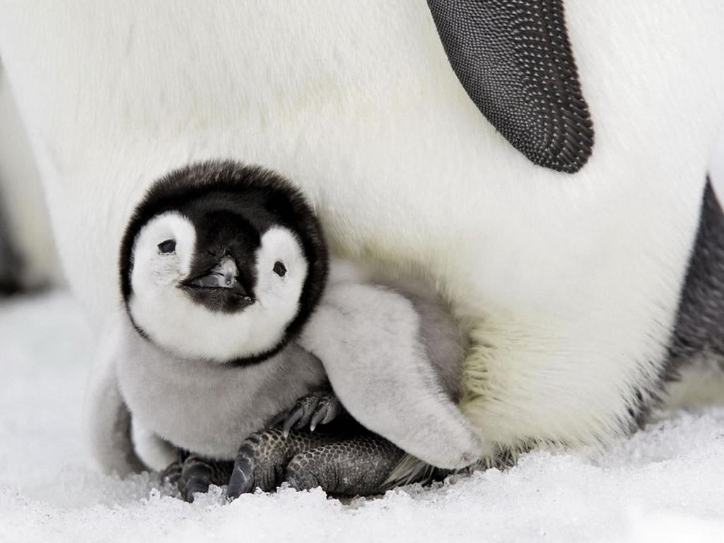 Baby Animals That make You Smile