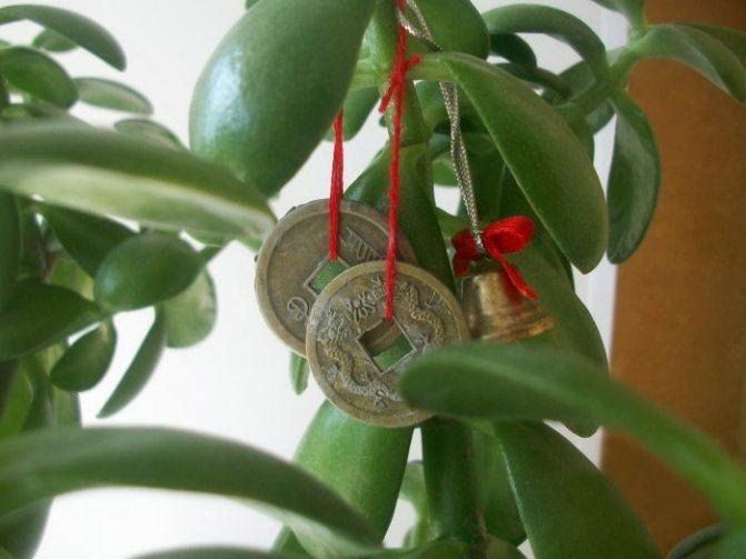 Фен-Шуйдегі қытайлық монеталар