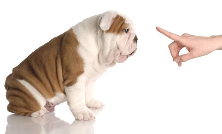 3 Steps You Must Take Before Beginning Dog Training