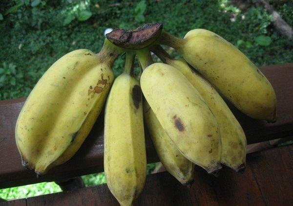 Bananas berbulu Thai.