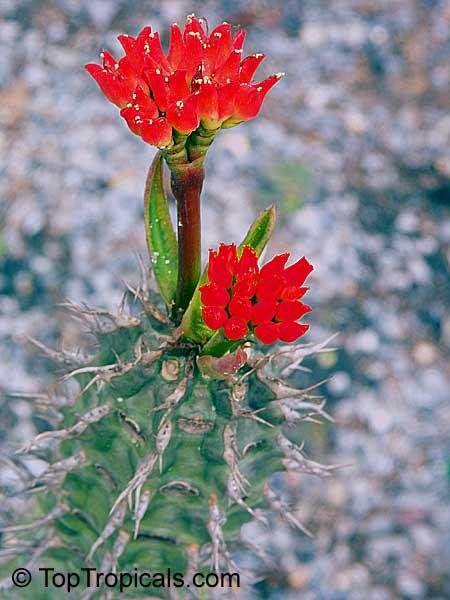 Miniature Cactus Sale