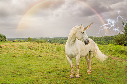 Image of: Pegasus Mean Americas Is The Bald Eagle And How Does Country Like Scotland Come To Choose The Unicorn Well There Is Really Great 967 Kiss Fm Fun Fact Of The Day Scotlands National Animal Is Literally Not Real