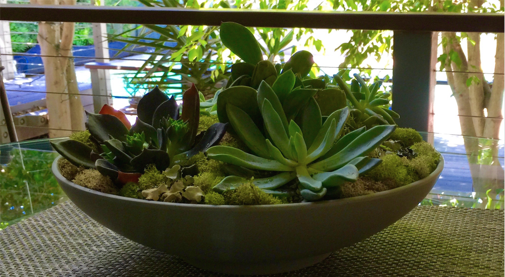 Plants Bowl Indoor